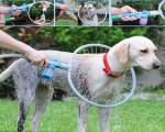 خرید پستی  ابزار شستشوی حیوانات خانگی woof washer360